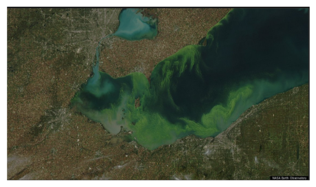 Lake Erie Algae 1