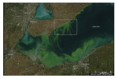 Lake Erie Algae 3